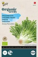 Bio Organic Krulandijvie Pancalière  (BIO)