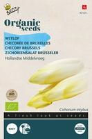 Bio Organic Witlof Middelvroeg  (BIO)