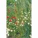 Weidebloemen mengsel     voor 250 m2   tot 500 m2 ,  inhoud 250 gram