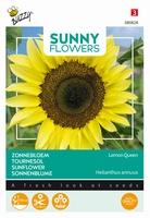 Helianthus zonnebloemen, Lemon Queen, frisgeel, 180cm hoog