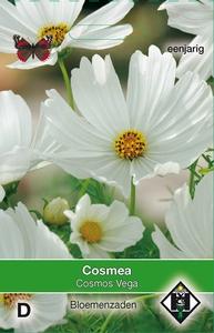 Cosmos bipinnatus Vega wit