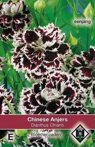 Dianthus chinensis Chianti