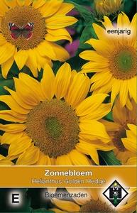 Helianthus a. Golden Hedge