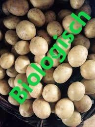 Pootaardappelen Biologisch 2019